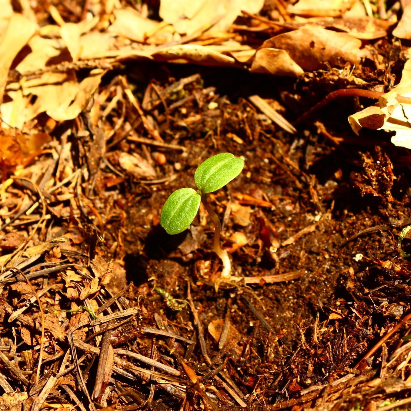 Ein neu gepflanzter Baum ist zu sehen