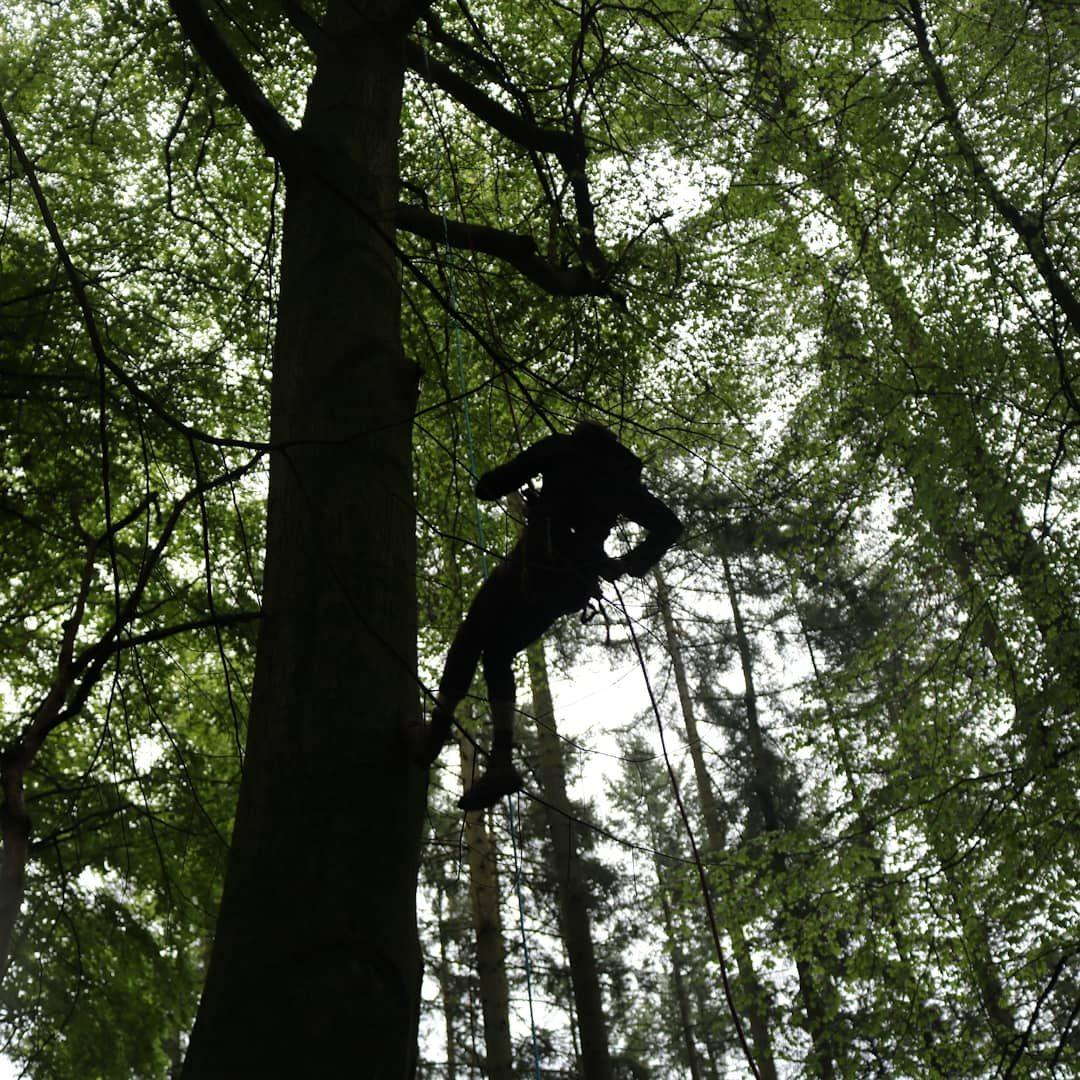 Ein Mensch klettert den Baum hoch