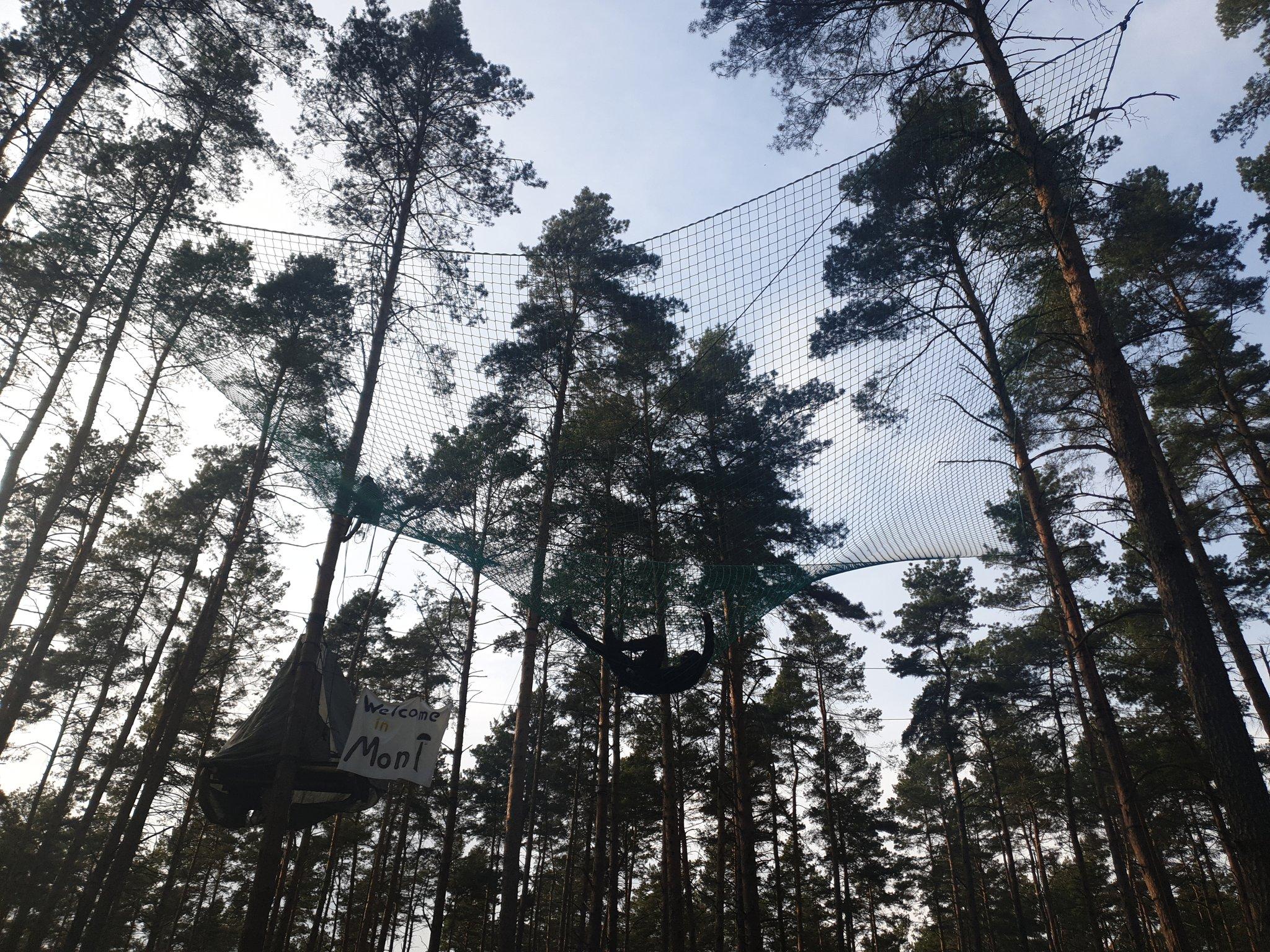 Das Bild zeigt ein Netz im besetzten Wald Moni Bleibt